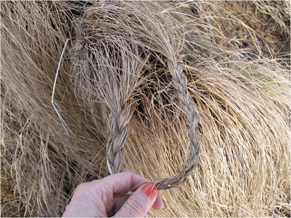grassworkswebb